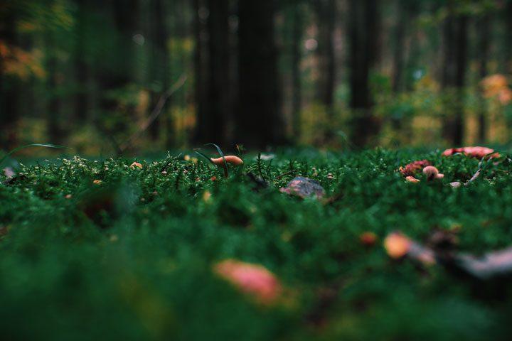 Suomi-Venäjä-Seura järjestää myös sieniretiä. Kuva Irina Kostenich from Pexels.